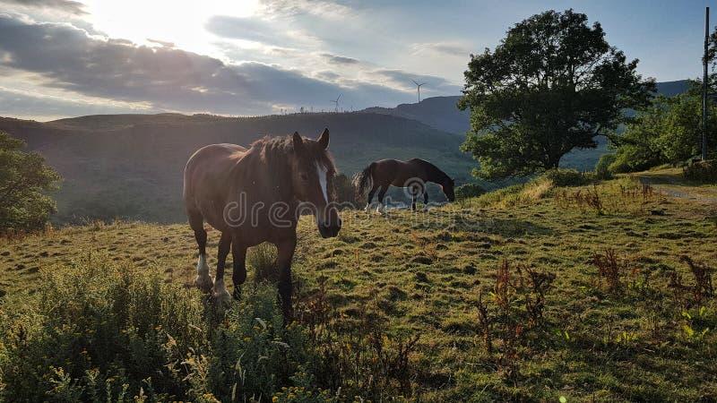 马在威尔士农场 图库摄影