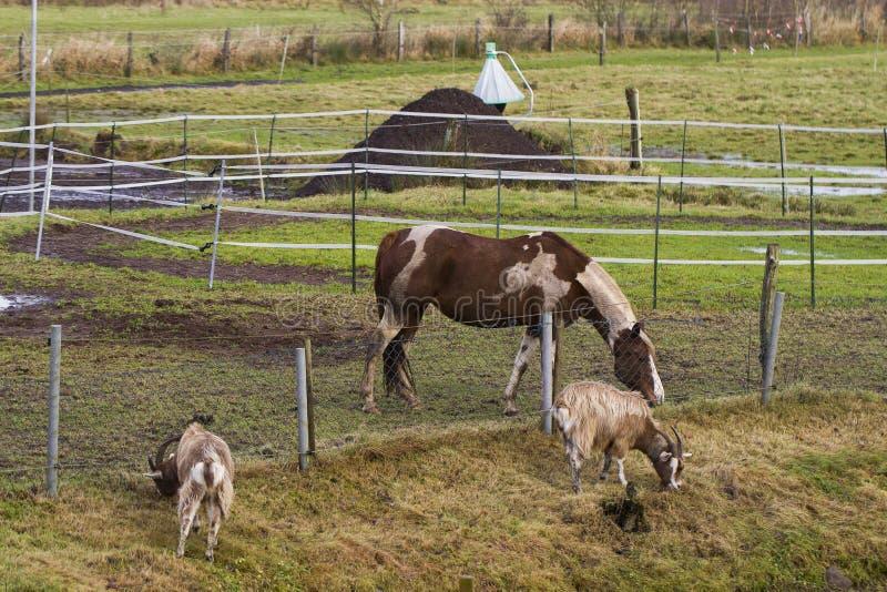 马在小牧场 免版税库存图片