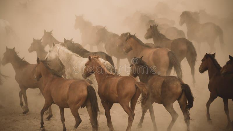 马在尘土的奔跑疾驰 库存照片