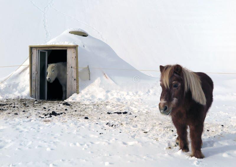 马在瑞士 免版税库存照片