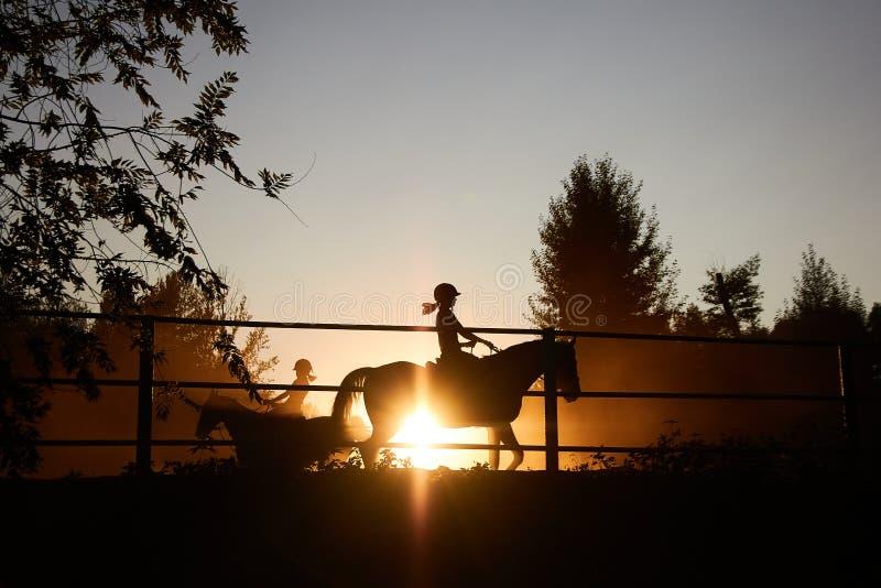 马在畜栏跑在日落 免版税图库摄影