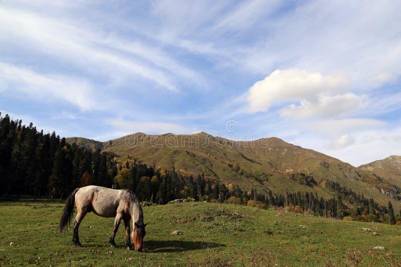 马在秋天高加索山脉吃草 免版税库存照片