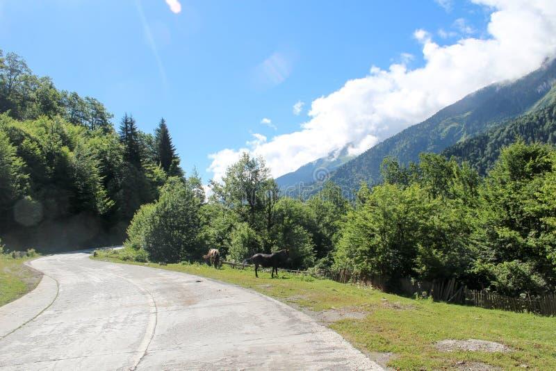 马在高加索山脉的山路 免版税库存图片