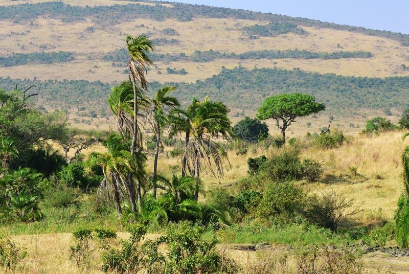 马塞语玛拉,肯尼亚,非洲 免版税库存图片