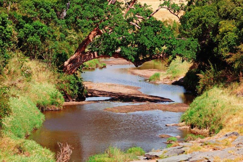 马塞语的玛拉河 免版税库存图片