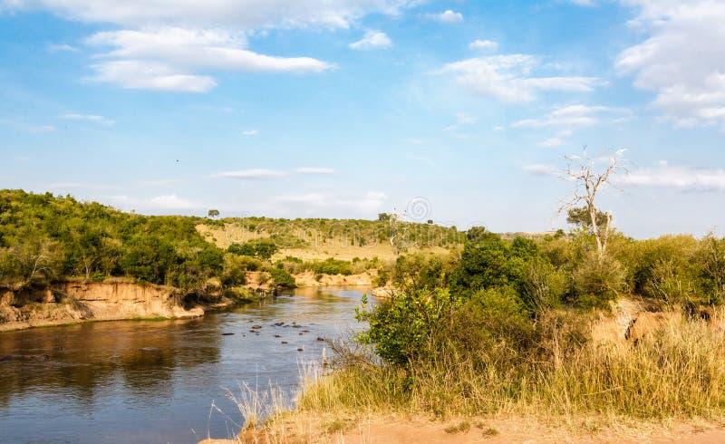 马塞语的玛拉玛拉河 在树中的河 肯尼亚 图库摄影