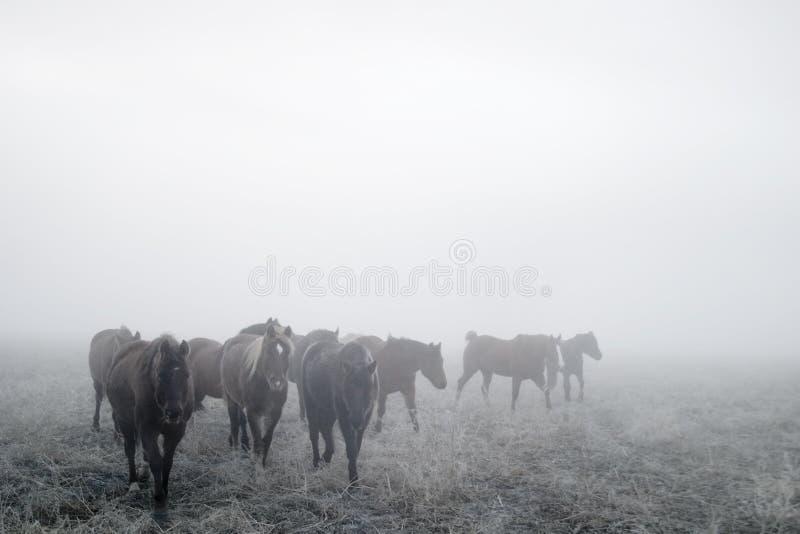 马大草原 库存图片