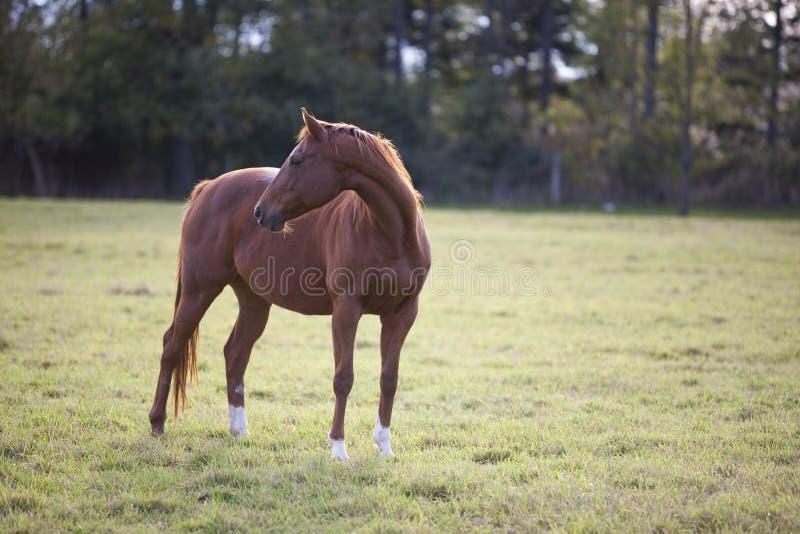 马姿势 免版税图库摄影