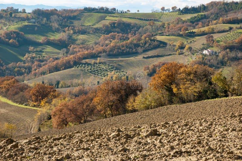 马尔什` s小山在Montefeltro地区,意大利 免版税库存照片