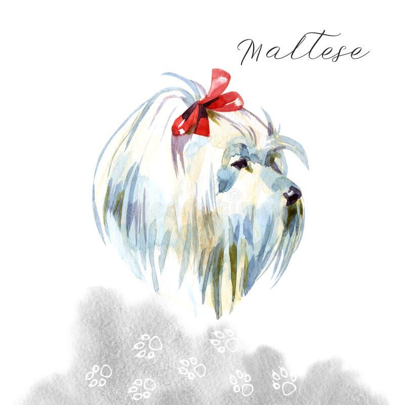 马尔他狮子狗 博洛涅塞 玩具或袖珍狮子狗在水彩背景 与蝶形领结的逗人喜爱的小狗 皇族释放例证