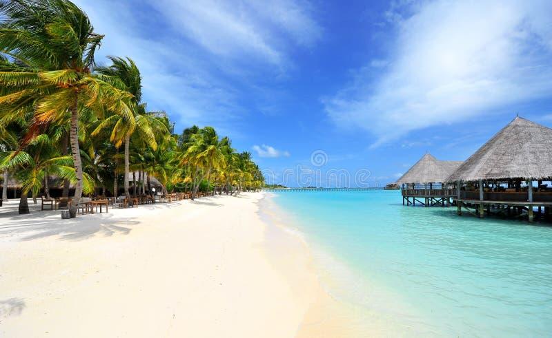 马尔代夫岸 免版税库存图片