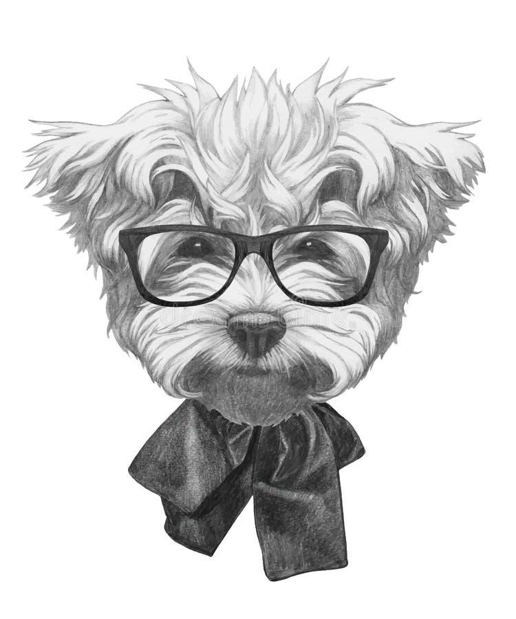 马尔他长卷毛狗原图与蝶形领结和玻璃的 库存例证