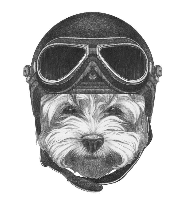 马尔他长卷毛狗画象与葡萄酒盔甲的 向量例证