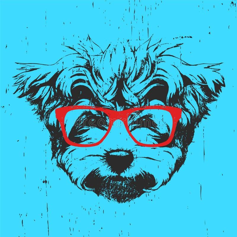 马尔他长卷毛狗画象与玻璃的 皇族释放例证