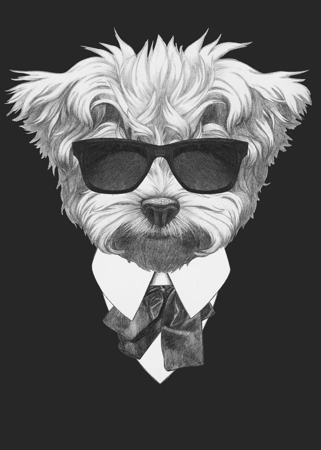 马尔他长卷毛狗画象在衣服的 库存例证