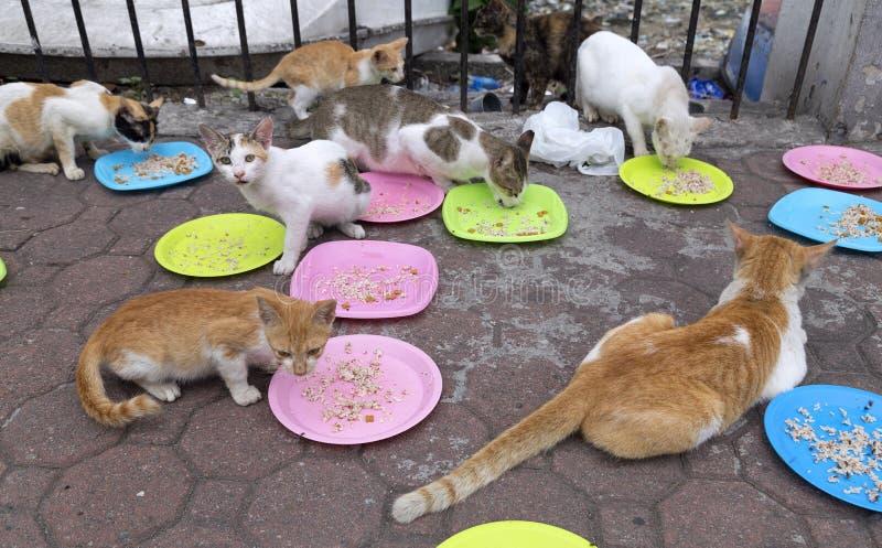 马尼拉,菲律宾- 2016年6月22日:吃在马尼拉街道的离群猫  免版税库存图片
