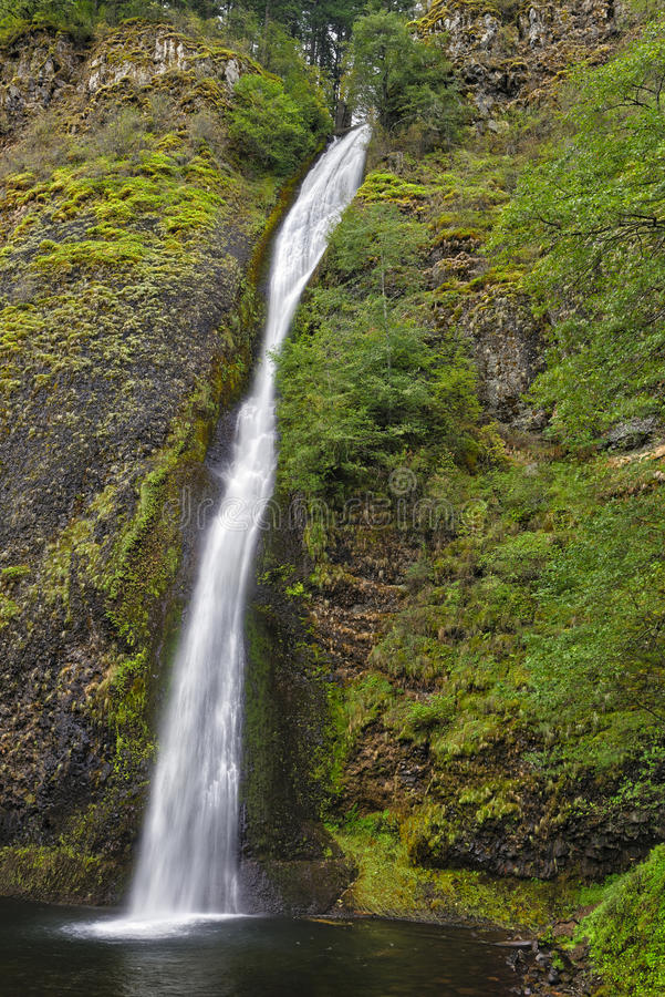 马尾秋天,哥伦比亚河峡谷全国风景区,华盛顿州 免版税库存图片