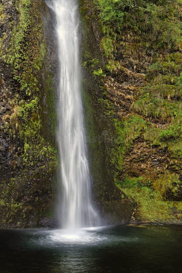 马尾秋天,哥伦比亚河峡谷全国风景区,华盛顿州 免版税库存照片
