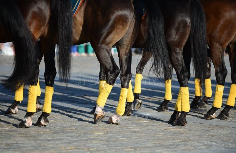 马展示的装饰的马腿 免版税库存图片