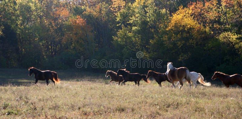 马开张牧场地运行中 免版税库存照片
