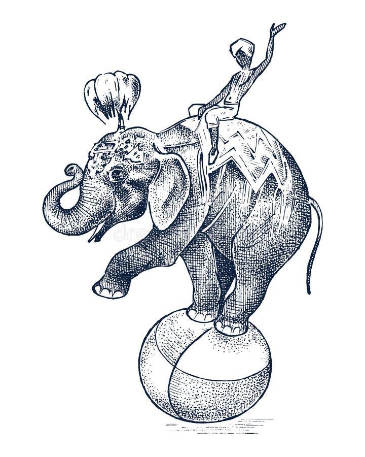 马戏大象 在球的非洲野生动物 在动物园显示 被刻记的剪影手拉在葡萄酒样式 库存例证