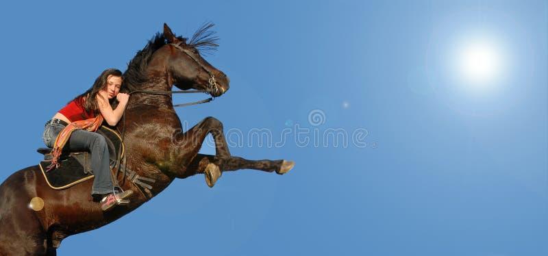 马抚养 库存照片