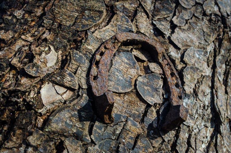 马掌湖Trailhead 垂悬在树干的三副老生锈的马掌 库存图片