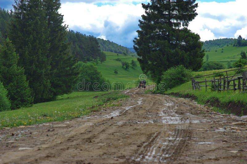 马推车在森林里 免版税库存图片