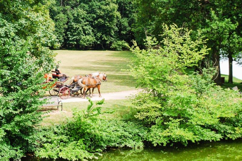 马支架乘驾在公园在夏天 库存照片