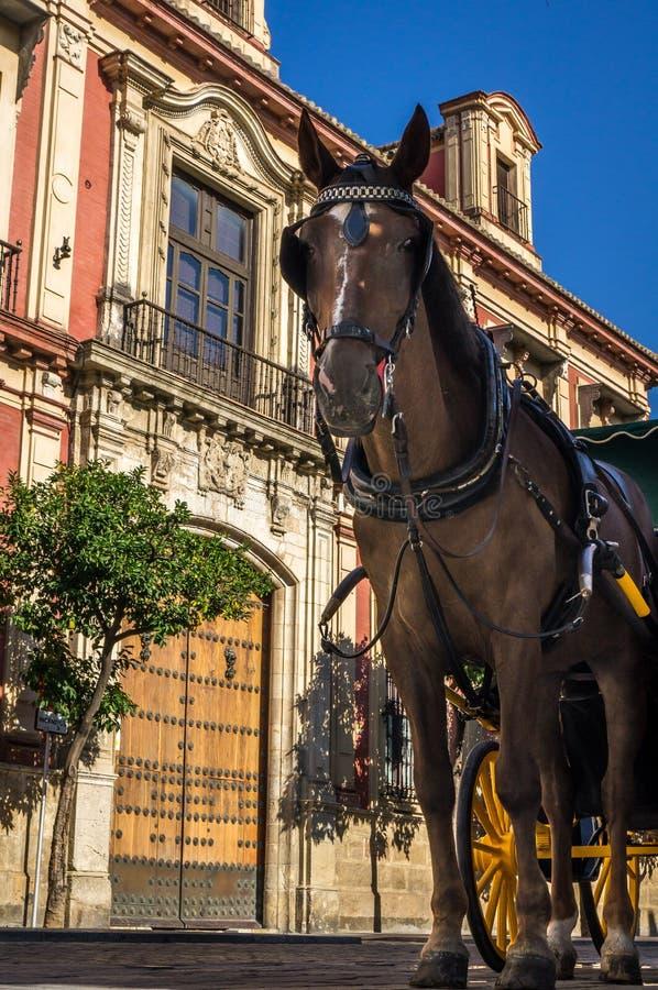 马支架在塞维利亚在夏天 免版税库存图片