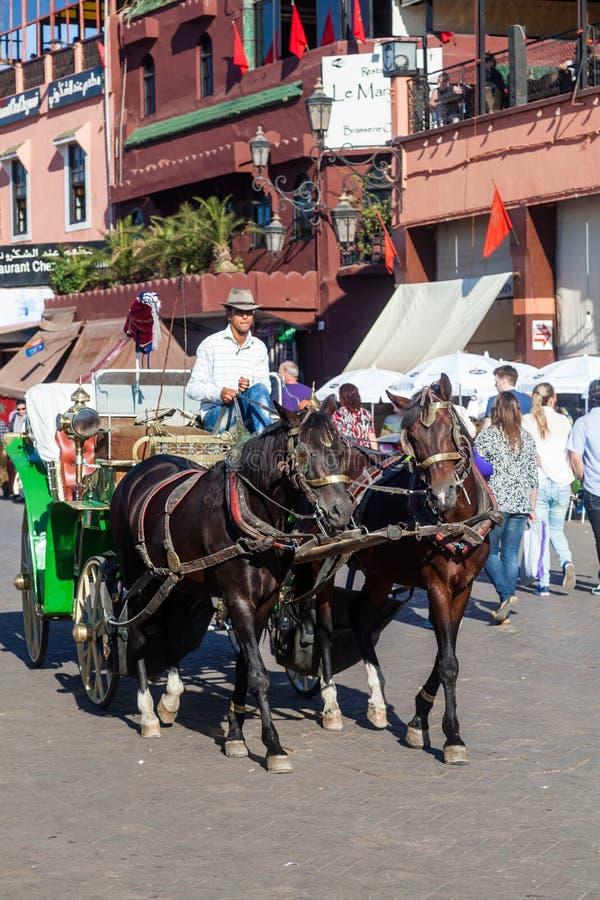马支架在老镇马拉喀什 免版税图库摄影