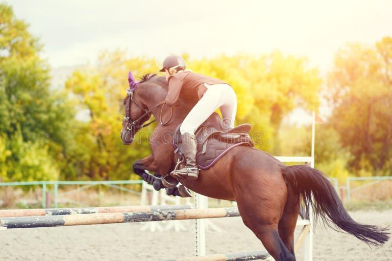 马术运动图象 跳跃赛 免版税库存图片
