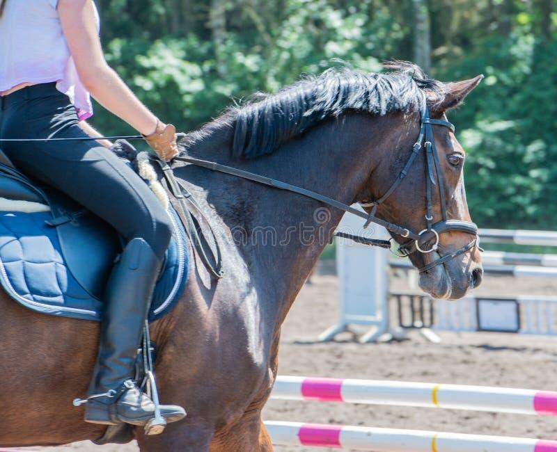 马术运动在驯马路线的驯马骑马 免版税库存照片