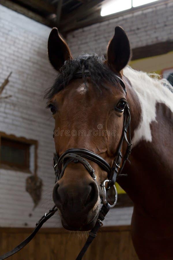 马术 一匹马的画象在笔的 免版税库存照片