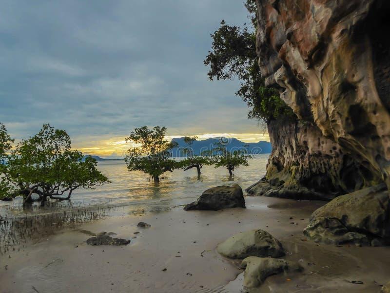 马来西亚- Magrove和海 免版税库存照片