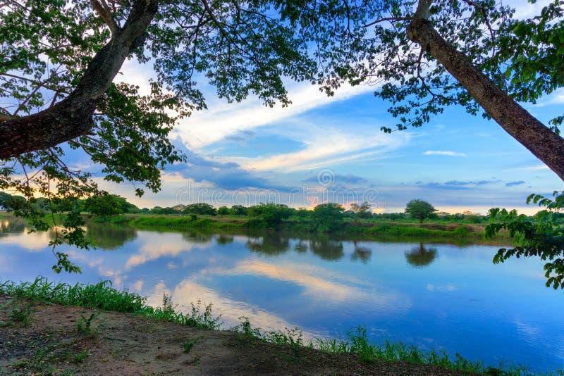 马格达莱纳河和树 免版税库存图片