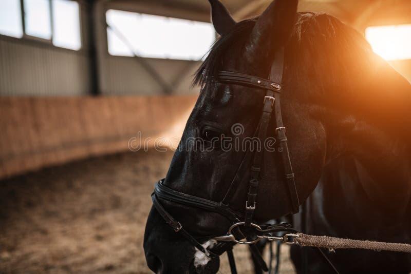 马槽枥关闭与在背景的阳光 免版税图库摄影