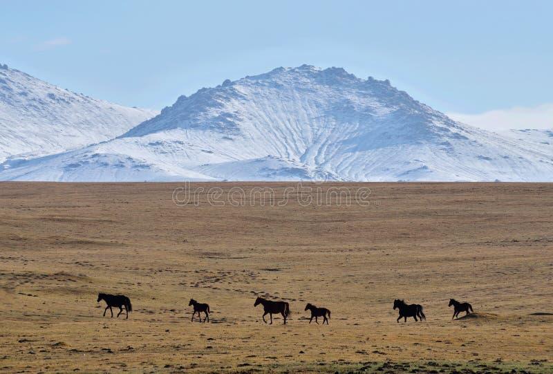 马牧群在儿子库尔山湖、天山中部、吉尔吉斯斯坦,中亚,普遍迁徙和马骑术地方附近的 免版税库存照片