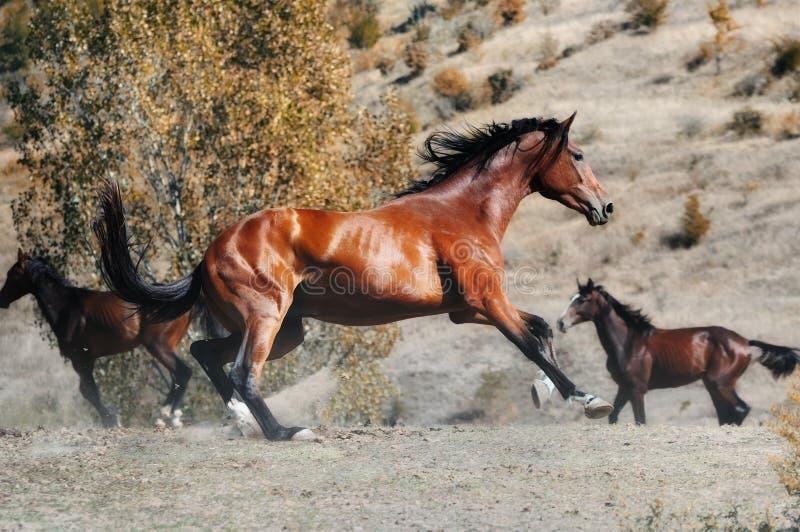 马牧群在秋天领域的 免版税库存照片