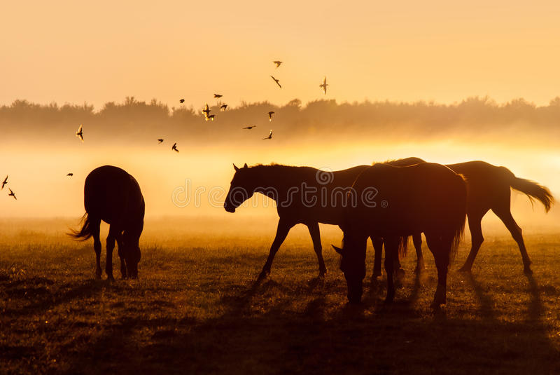 马牧群在飞行鸟群的日出的 免版税库存照片