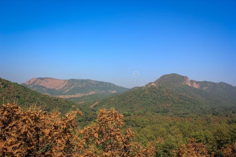 马球森林小山视图 免版税库存照片