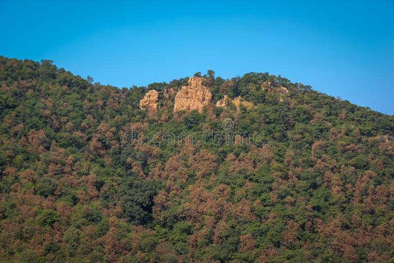 马球森林小山视图 免版税图库摄影