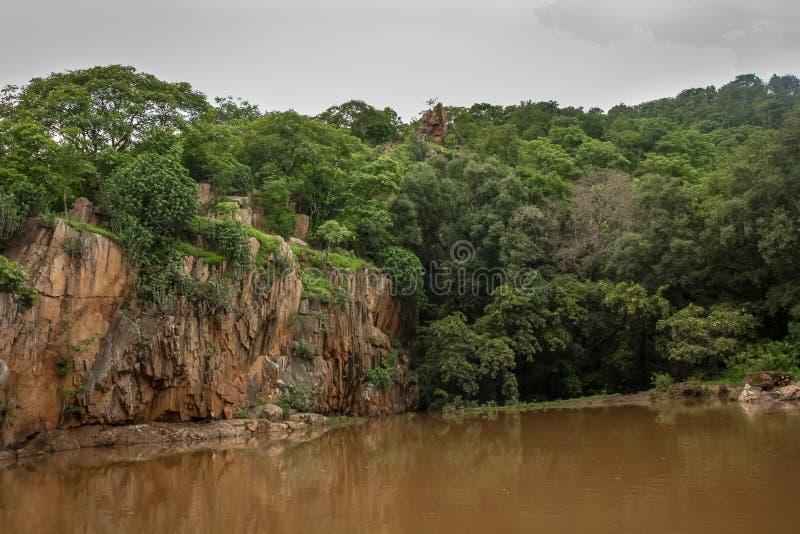 马球森林小山视图 库存图片