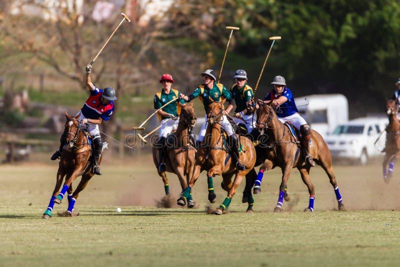 马球比赛智利南非行动 免版税库存图片
