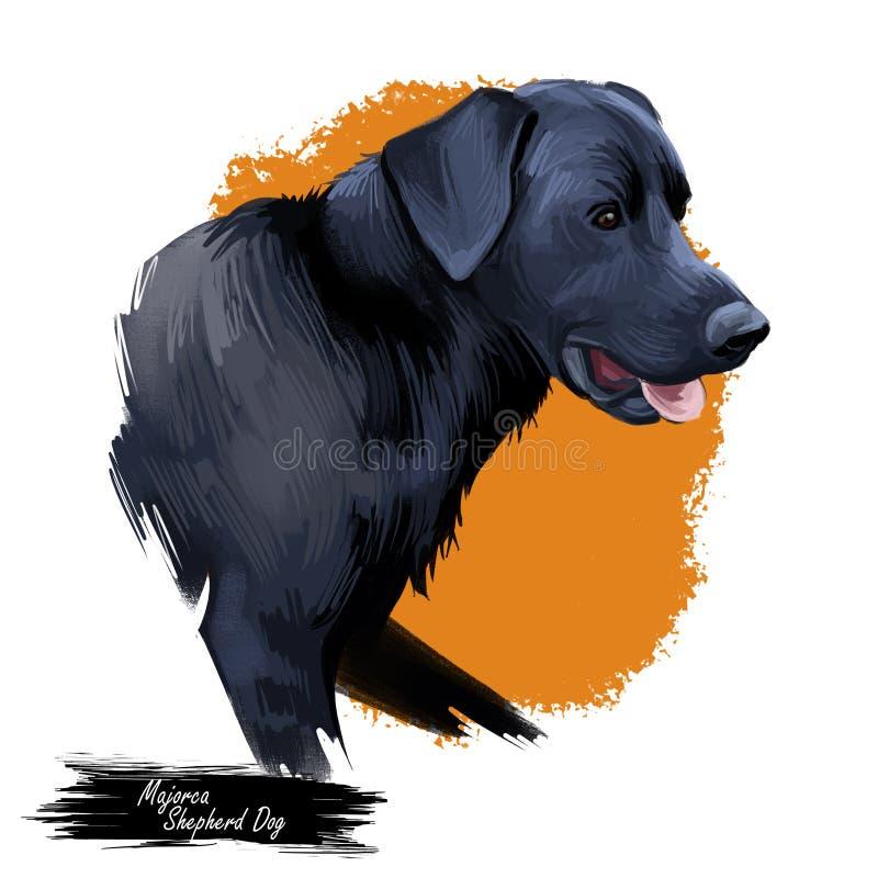 马略卡牧羊犬,perro de pastor数字艺术例证 宠物于西班牙,家畜哺乳动物的陈列发起 皇族释放例证