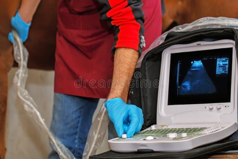马的兽医考试 免版税库存图片
