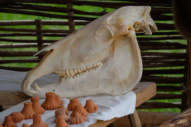 马的头骨 免版税库存图片