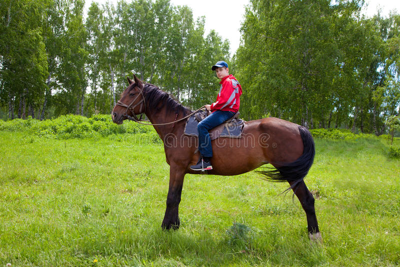 马的男孩 免版税库存照片