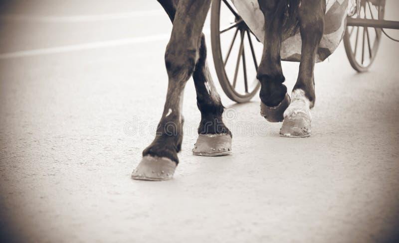 马的腿的黑白图象 库存图片