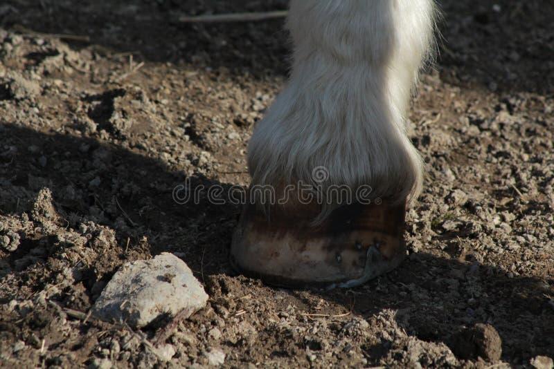 马的蹄 免版税库存图片